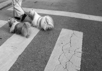 #streetphotography #panasonic #lumix #lx5 #digital